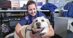 Gracie at Ambulance