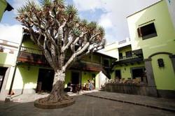 Casa de la Cultura Arucas 2014 (1).jpg
