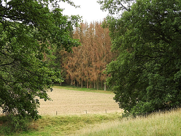 Wald 2.jpg