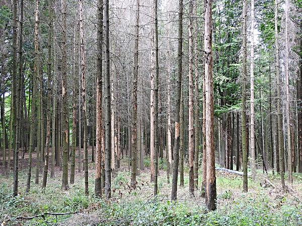 Bäume_1.jpg