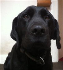 Dog friendly | Bankfoot Inn Perthshire hotel