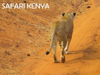 Partez à l'aventure : direction le Kenya !