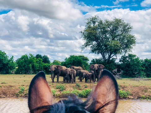 Elephant Encounter!