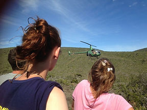 Wild Inside Adventures Veterinary Volunteer Programme South Africa Game Captue Helicopter