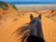 A red sand dune in Mozambique through the ears of a horse.