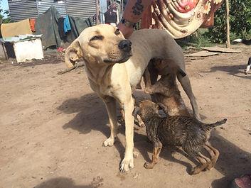 Wild Inside Adventures Veterinary Volunteer Programme South Africa Community Work Dog
