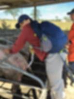 Wild Inside Vet Volunteers South Africa Artificial Insemination