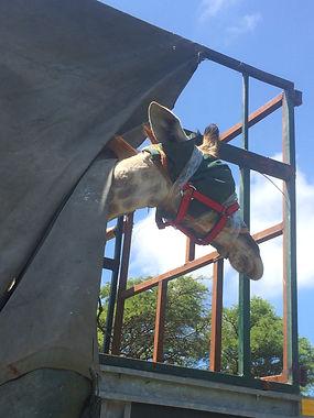 Wild Inside Vetrinary Volunteer Programme African wildlife Vet Work