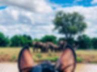 Horse riding safari south africa / botswana - wating elephnt herd Mashatu Reserve