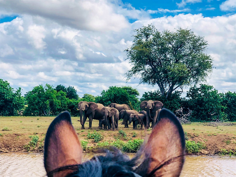 Horse riding safari south africa / botswana - wating elephnt herd Mashatu Reserve