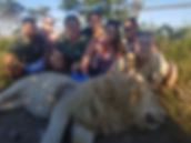 Wild Inside Veterinary Volunteer Programme South Africa Lion Stitch Up