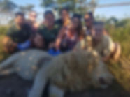 Wild Inside Veterinart Volunteer Programme South Africa Lion Stitch Up