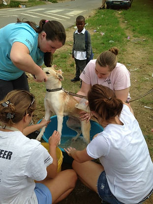 Wild Inside Adventures Veterinary Volunteer Programme South Africa Community Work Dogs
