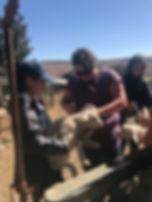 Wild Inside Vet Volunteers South Africa Lamb