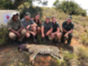 Volunteers with a sedated cheetah.