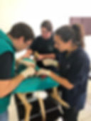 Wild Inside Veterinary Volunteer Programme South Africa Surgery Clinical Work Studets
