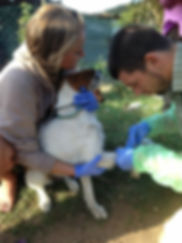 Wild Inside Adventures Veterinary Volunteer Programme South Africa Community Work Dog Veterinarion Vet Nurse Volunteers