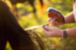 A girl's hands grooming a horse - close up.