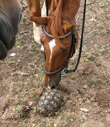 Horse Meets Tortoise!