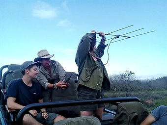Volunteers tracking animals with specialist equipment
