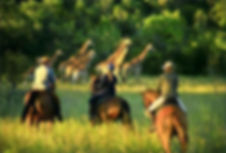 Riding-safaris-at-Ants1_edited.jpg
