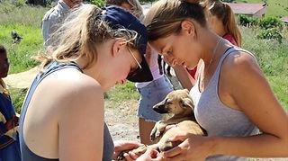 Wild Inside Adventures Veterinary Volunteer Programme South Africa Community work Dog Studets Volunteers Vet Nurse