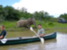 A man kayaking with an elephant behind him on the side of the river.