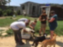 Wild Inside Vet Volunteer South Africa Dop Dipping