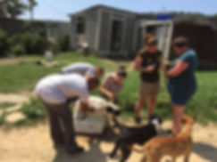 Wild Inside Adventures Veterinary Volunteer Programme South Africa Community Work Dipping Dogs