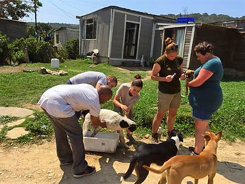 Volunteers dipping dogs in the township.