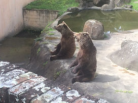 Wild Inside Adventures South Africa Bears East London Zoo