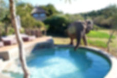 An elephant drinking from a pool.