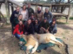 Wild Inside Vet Volunteers South Africa Lion Capture