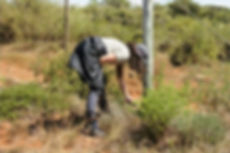 Girl inspecting grass species