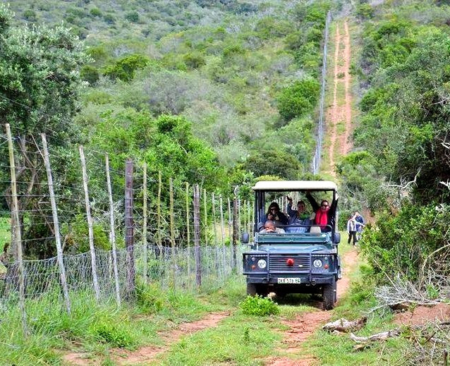 Game Drives are a Daily Activity on the Reserve!