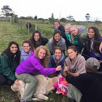 Wild Inside Adventures Veterinary Volunteer Programme South Africa Wildlife Work Game Capture Vet Students
