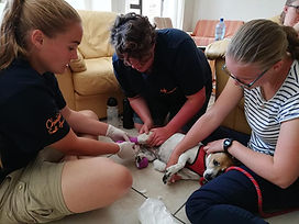 Wild Inside Vet Volunteers South Africa Bandaging Practice