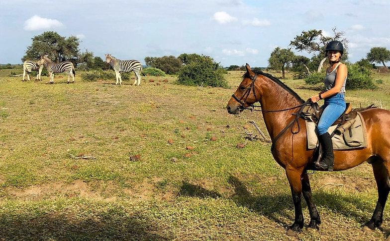 Horse Riding Safari SouthAfrica Botswana Mashatu Reserve Zebra