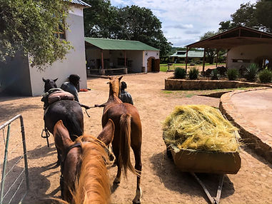 Horse Riding Safari Stble Yard At Lodge