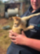 Wild Inside Adventures Veterinary Volunteer Programme South Africa Community Work Cat