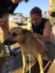 Wild Inside Adventures Veterinary Volunteer Programme South Africa Community Work Dog Vet Studets Volunteers Pre-vet