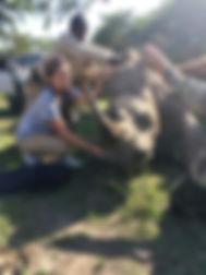 Wild Inside Vet Volunteers South Africa Rhino Oxygen