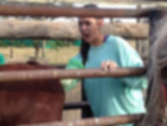 Wild Inside Veterinary Volunteer Programm South Africa. Pregnancy Testing Cows.