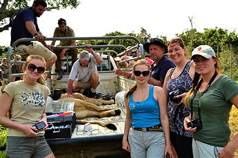 A group of volunteersassistinga vet with the relocation of a lion.