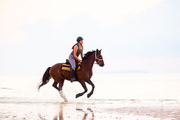A girl galloping on a horse on the beach.