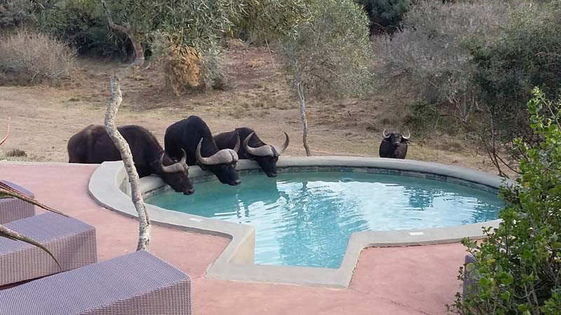 'What a Handy Watering Hole'!