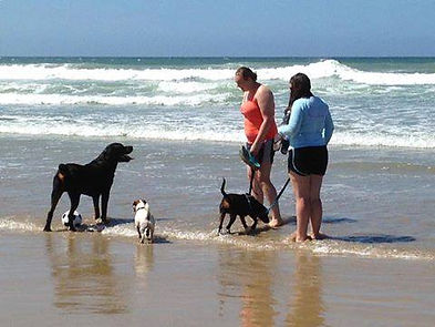 Wild Inside Adventures South Africa Dog Walking