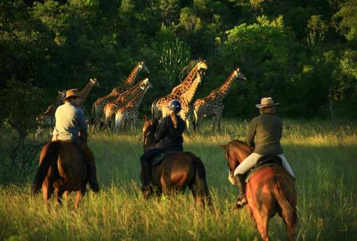 Giraffe Encounter