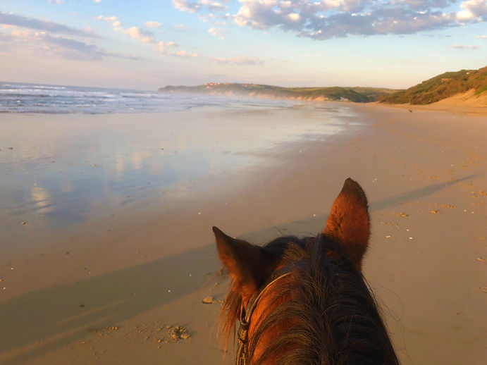A view of Chintsa East beach from between a horse's ears.