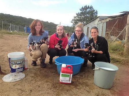 Wild Inside Adventures Veterinary Volunteer Programme South Africa Community Work Dogs Students Pre-vet Vet Nurse Volunteers